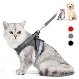 <font><b>Cat</b></font> <font><b>Harness</b></font> And Leas