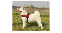 Funny Honey Dog Vest Halter Harness Adjustable.