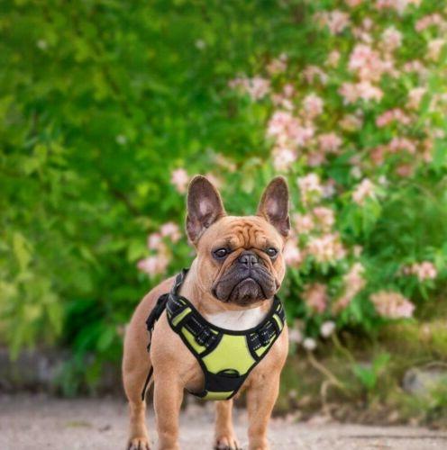 RABBITGOO No Pull Adjustable Dog Harness 3M Reflective - Gre