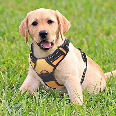 Rabbitgoo Front Range Dog Harness No-Pull Pet Adjustable Out