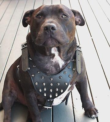 Studded&Spiked PU Harness Collar Leash For Pitbull Mastiff