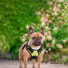 American bull dog's walking harness,back hand grab for train