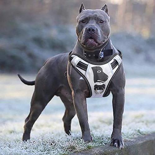 big dog harness pull anti