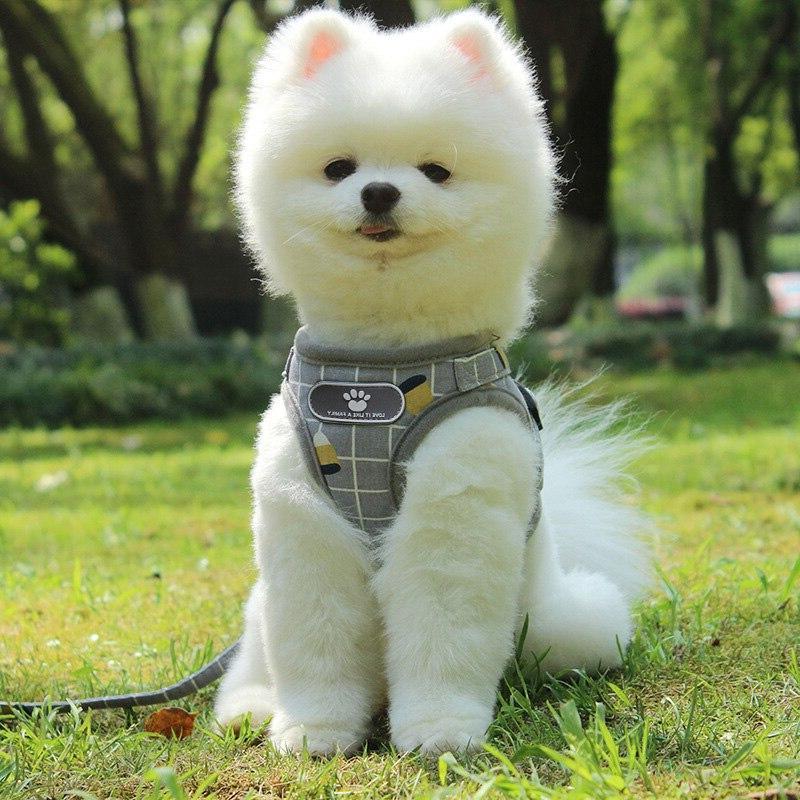 <font><b>Harness</b></font> Puppy Vest <font><b>Harness</b></font> Collar For Pug French arnes perro 35