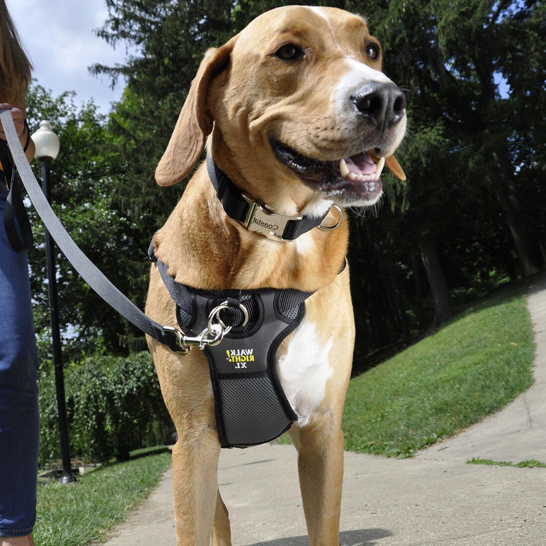 Coastal Pet Walk Right Padded Dog Harness - Black