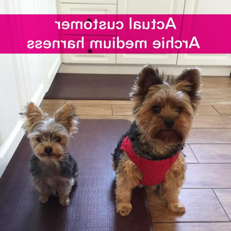 metric / Fit No and Medium Dog Harness