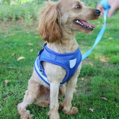 Harness Vest Leash Cat Soft Puppy Small Strap