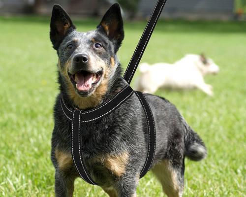 Dog Accessories Harness & Leash Heavy Adjustable Durable Medium Dogs