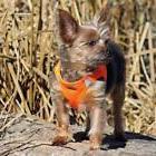 Dog Harness American River Ultra Choke-Free Mesh Comfort Str