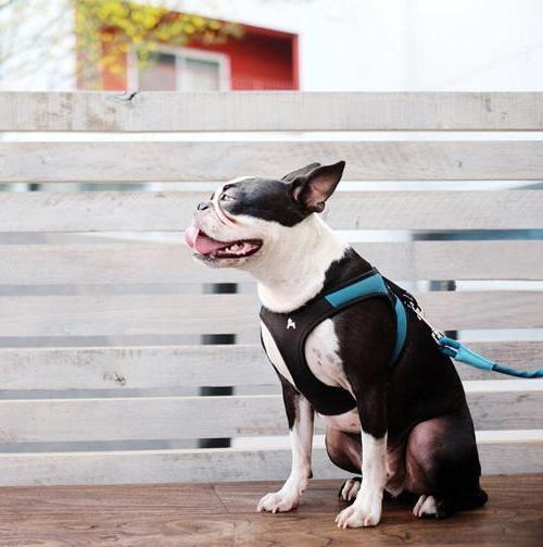 Gooby Easy Fit Small Breed Harness S L