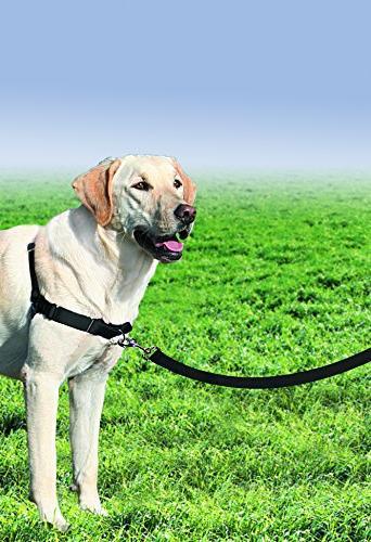 PetSafe Large,