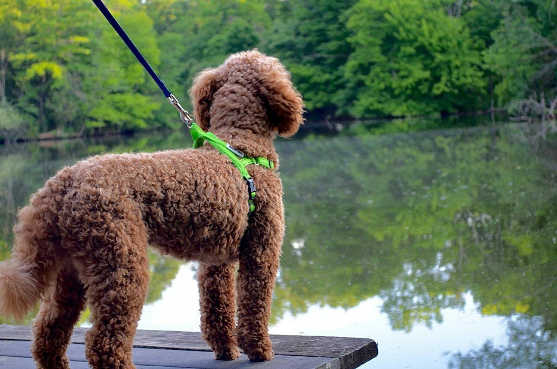 DEXDOG EZHarness, Dog   On/Off Quick Easy Walk
