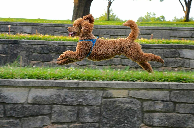 DEXDOG Dog     Easy Walk Vest
