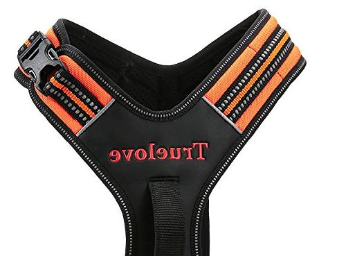 Best Dog Harness. Outdoor Adventure with Colors