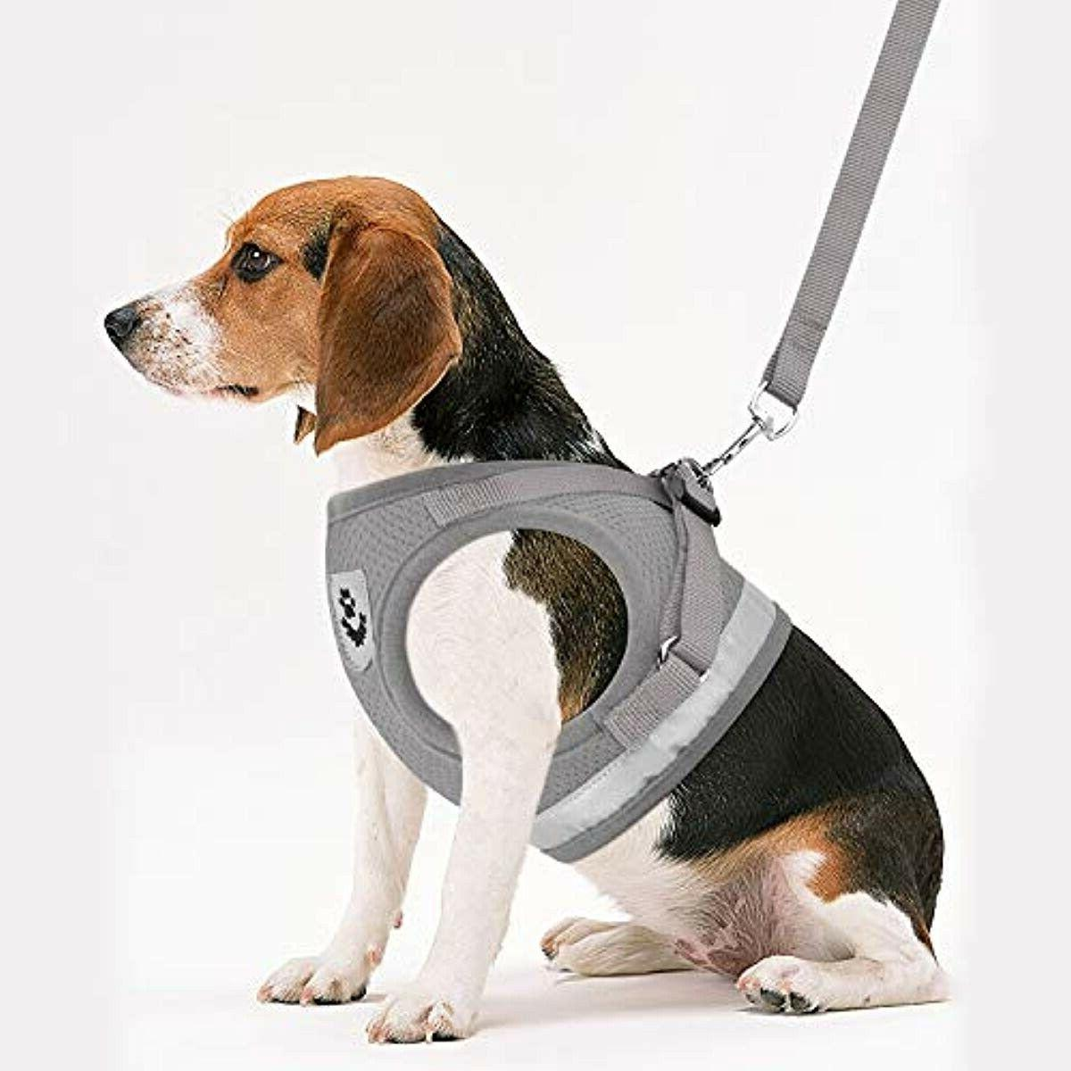 GAUTERF Dog Universal Set, Proof Harnesses