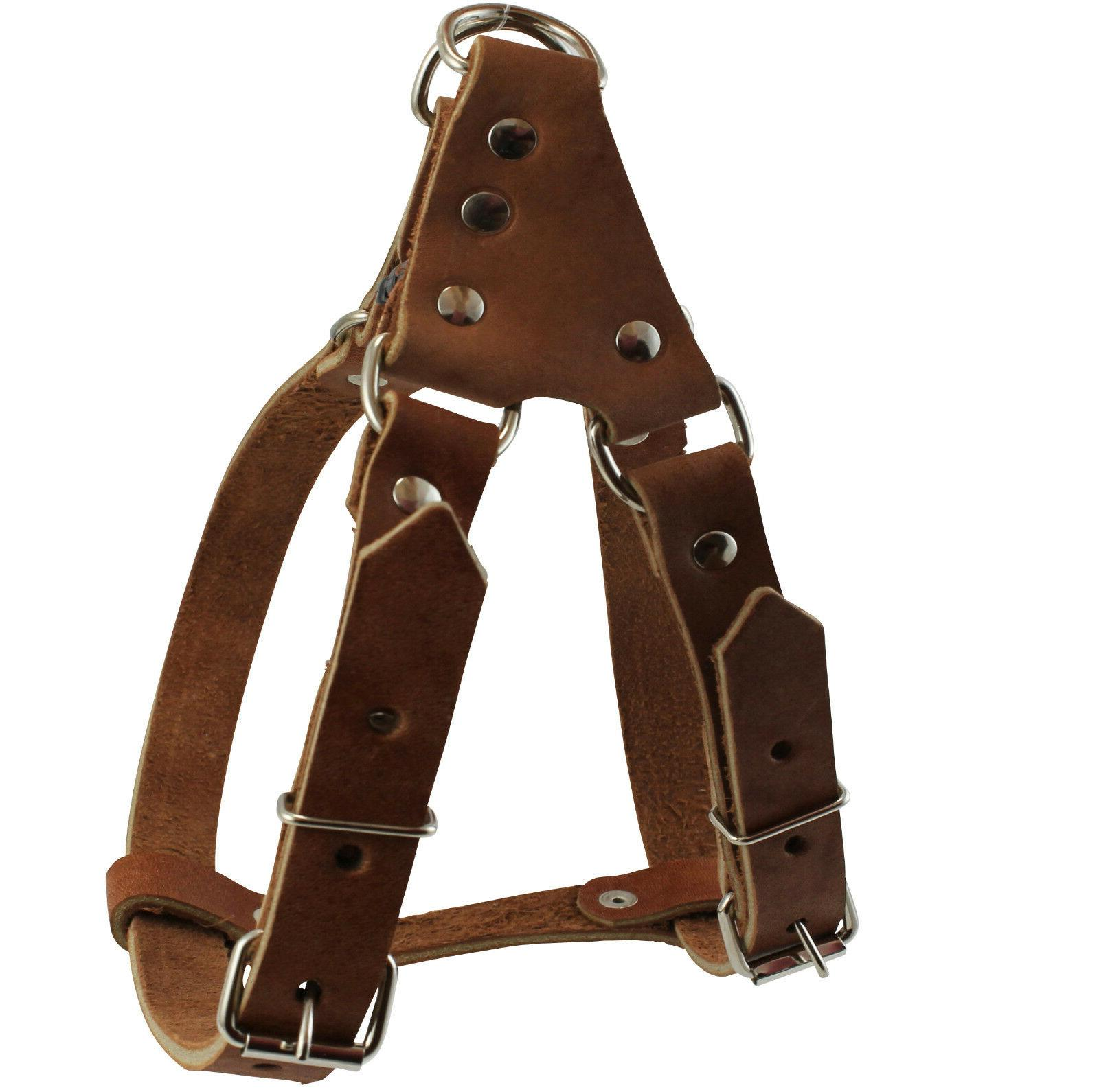 Genuine Leather Chest 3/4-inch Dog