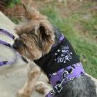 Halloween Dog Harness Vest by Doggie Design - Too Cute To Sp