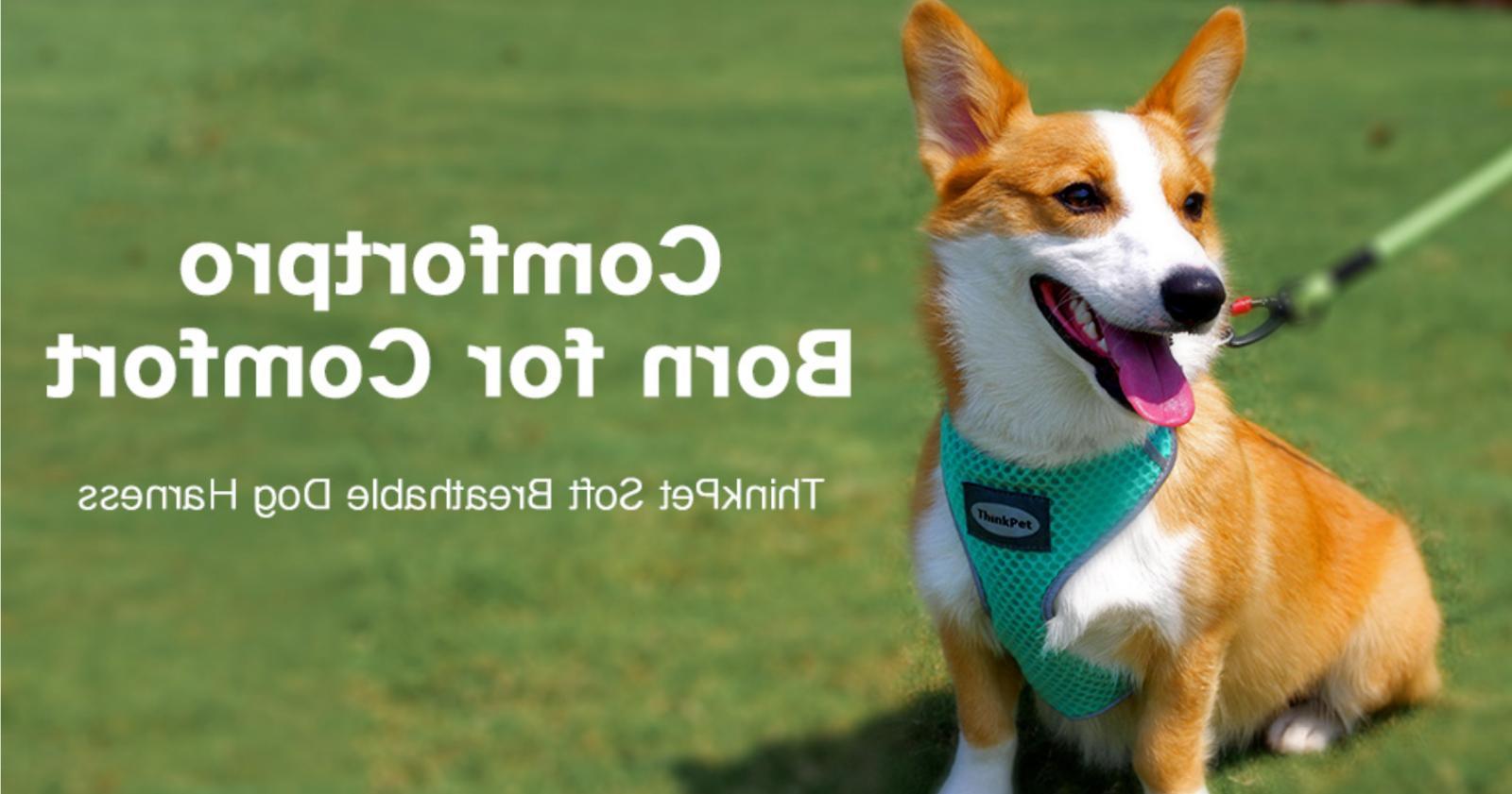 Harness Dog Mesh Puppy No Neon