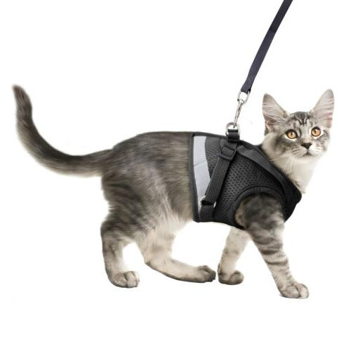 Leash Breathable Chest Strap