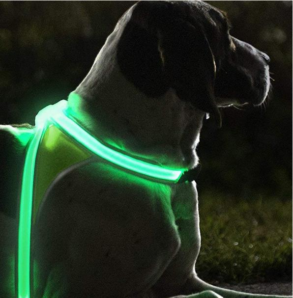 noxgear LightHound Illuminated Dogs