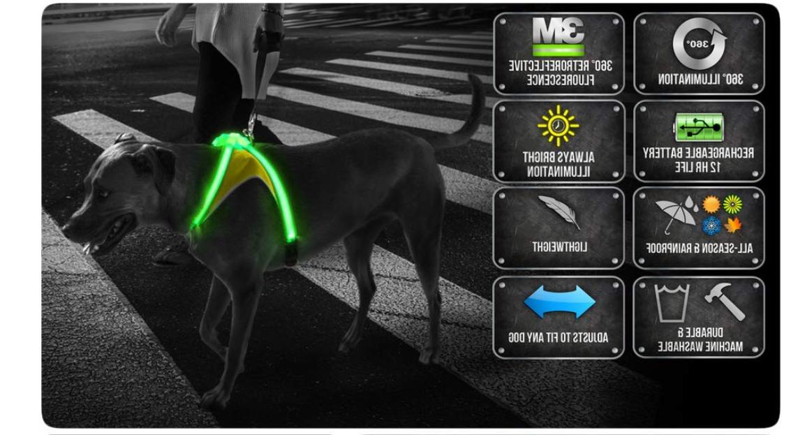 lighthound revolutionary illuminated and reflective harness