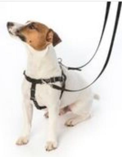 MED 2 Hounds PULL Dog & Leash TURQUOISE