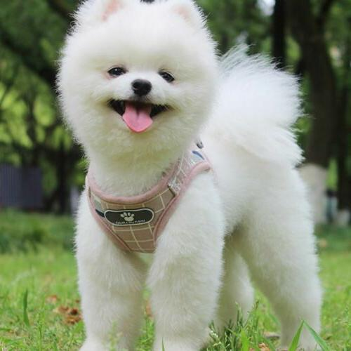 No Pull Dog Pet Harness Adjustable Vest Dogs M