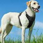 Eagloo No Pull Dog Harness with Front Clip,Walking Pet 2 Met