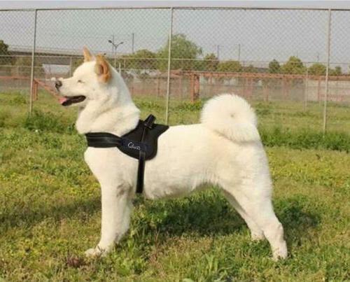 Lifepul Dog Vest Harness for
