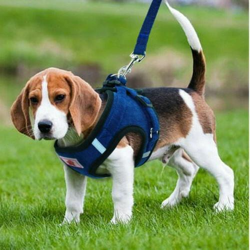 Pet SMALL Harness Soft Collar Safety Strap Vest Leash