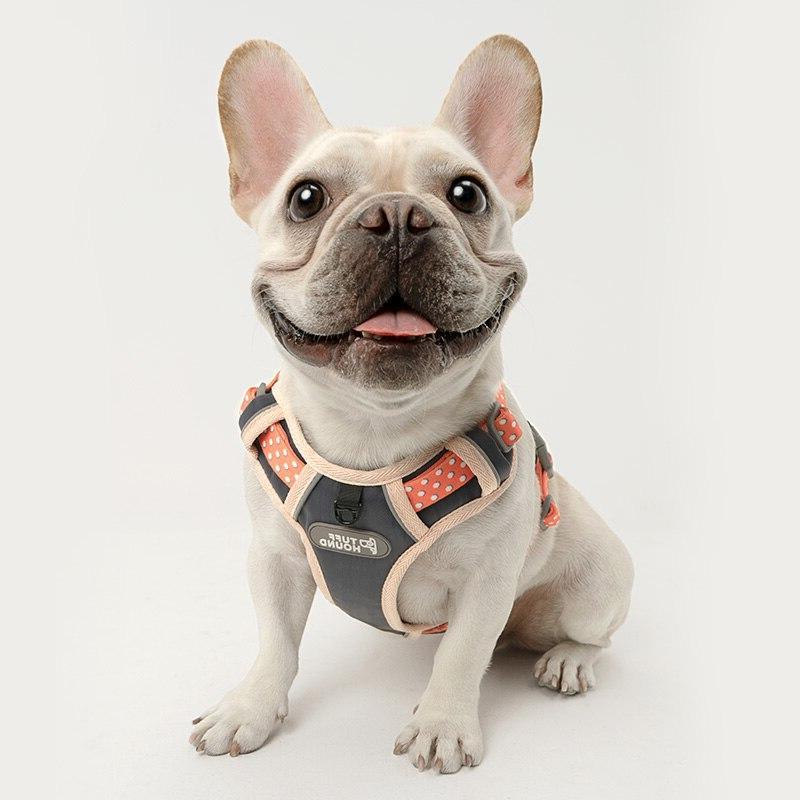 Pet <font><b>Dog</b></font> <font><b>Dog</b></font> <font><b>Harness</b></font> <font><b>Harness</b></font> pet 2019
