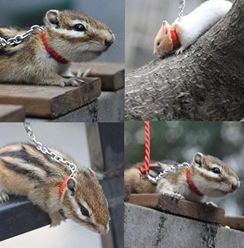mkki Pet Hamster Bird Tie with