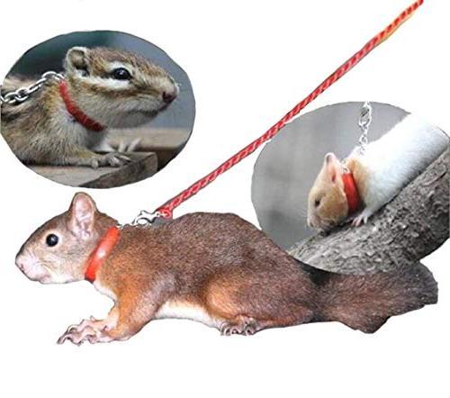 pet rat squirrel hamster leashes bird flexible