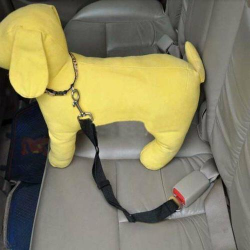 Pet Safety Car Travel Safe Puppy