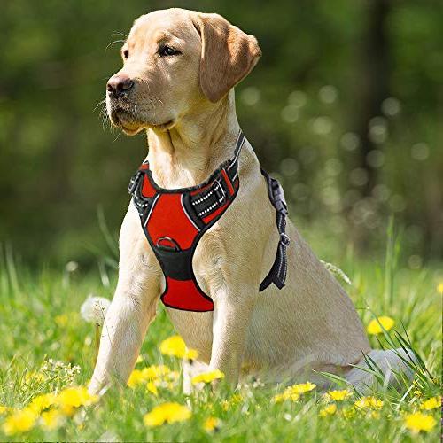 BARKBAY Pull Dog Harness Clip Duty Handle Walking