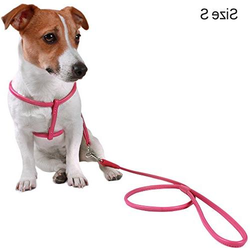 CollarDirect Rolled Harness Small Leash for Pink White Green Purple Beige Brown