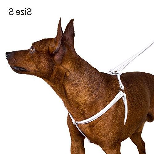 Harness Leash Set for Pink Red White Blue Green Brown Yellow
