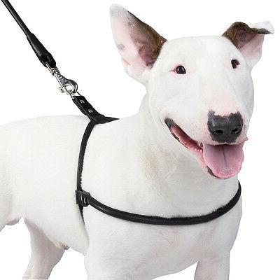 rolled leather dog harness small medium large