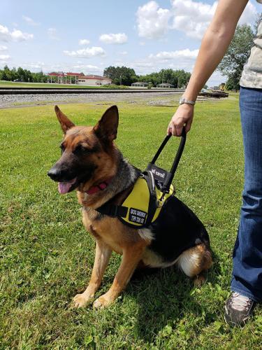 Service Dog Vest Harness ActiveDogs Nylon Bridge