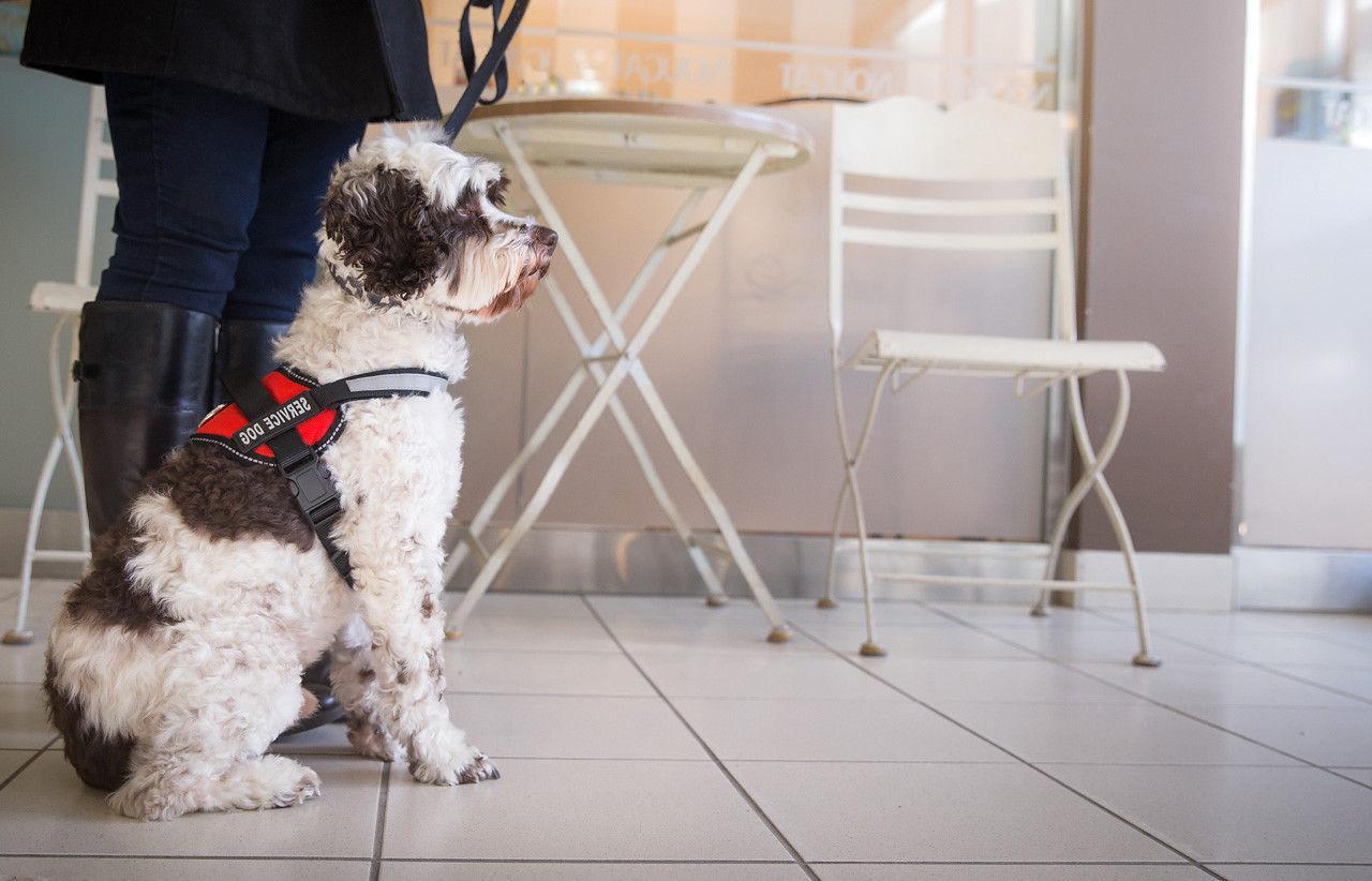 SERVICE DOG HARNESS W/ CARDS, Red, - XXL