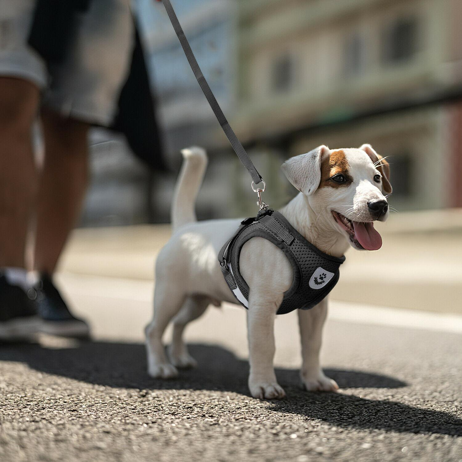 Small Dog Puppy Breathable Mesh Harness Vest Collar Soft str