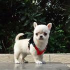 Small Pet Dog Soft Suede Leather Teacup Puppy Harness Outdoo