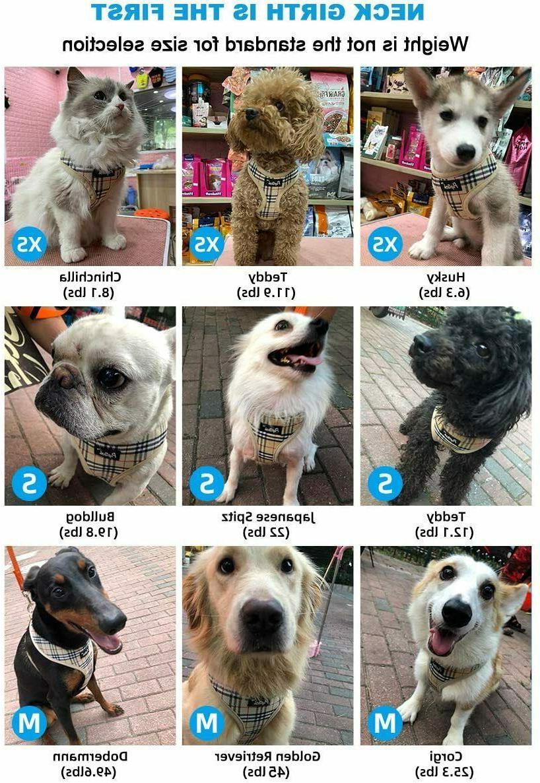 Soft Mesh Harness Pet Vest MEDIUM