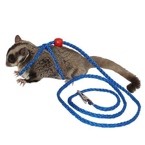 sugar glider and squirrel harness