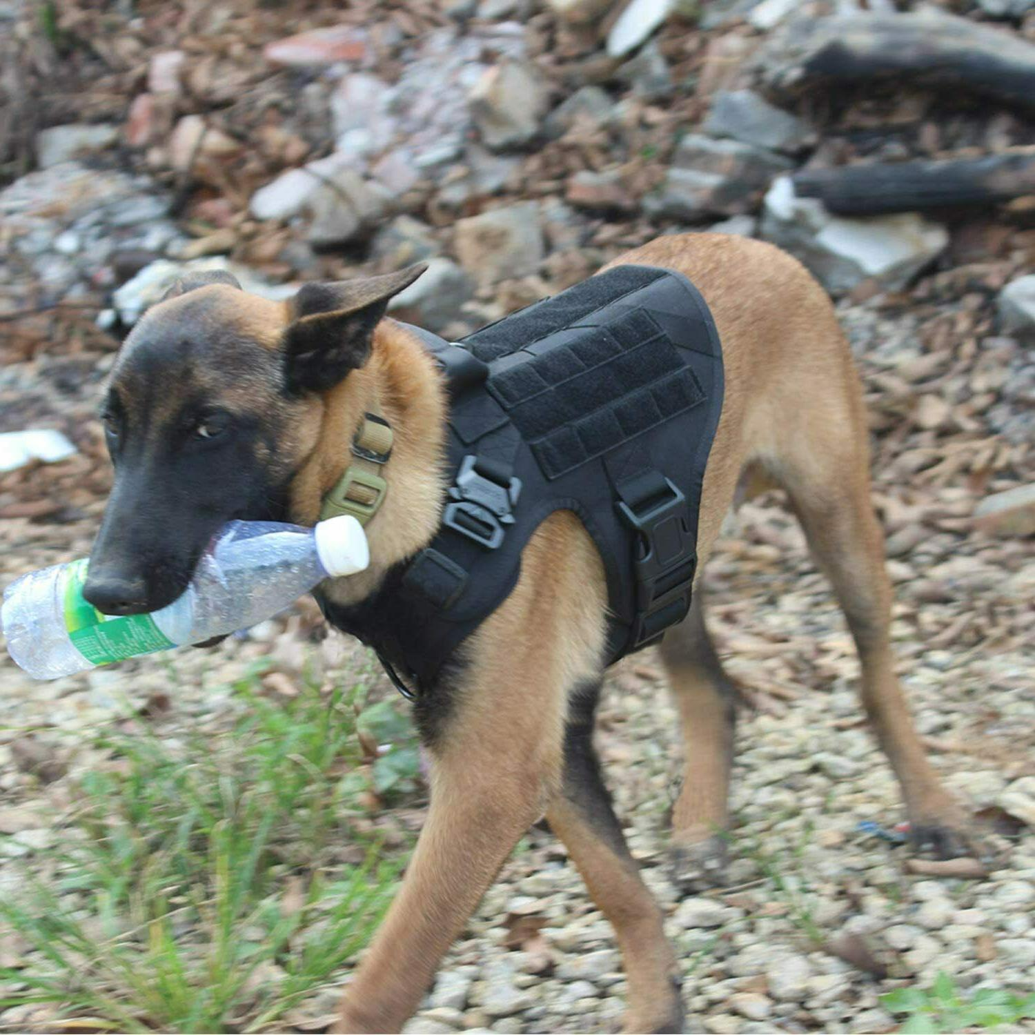 Tactical with Handle Dog Dog
