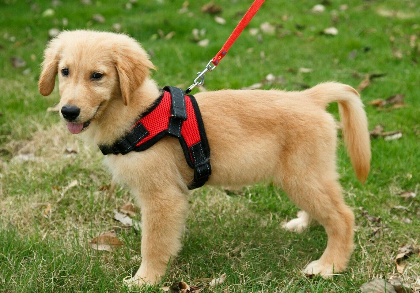 Ultimate Adjustable Dog Harness Small