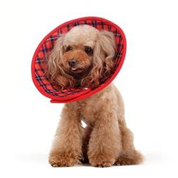 Alfie Pet by Petoga Couture - Candace Soft Recovery Collar