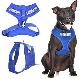 Dexil Limited TRAINING  Blue Color Coded Non-Pull Front and
